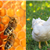 Bees and Chickens