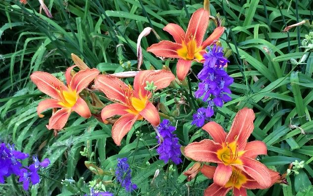Orange and Purple Flowers with Greenery