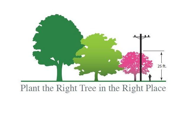 Plant-the-right-tree-vegetation-management