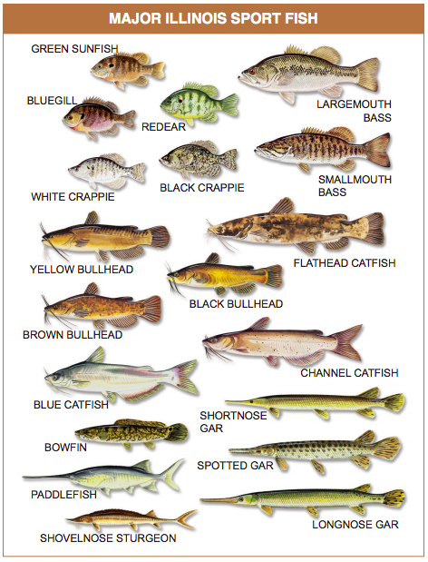 Major Illinois Sport Fish