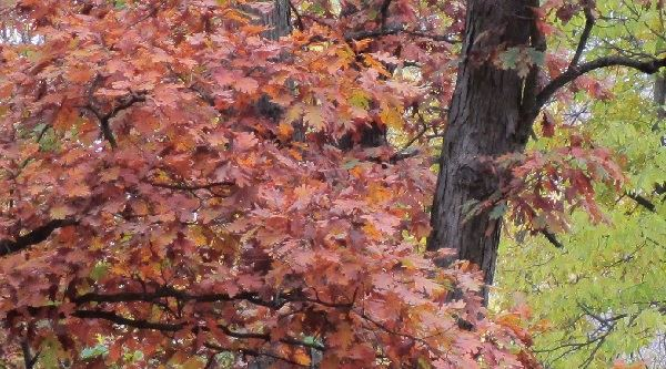 Image Footer - Autum Leaves Red and Green