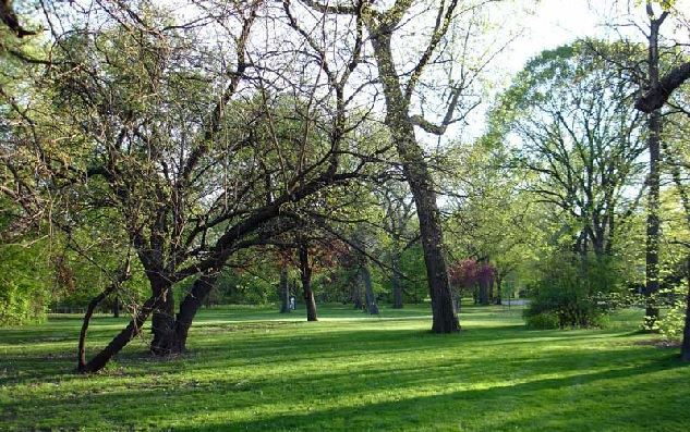 Scottswood_Common
