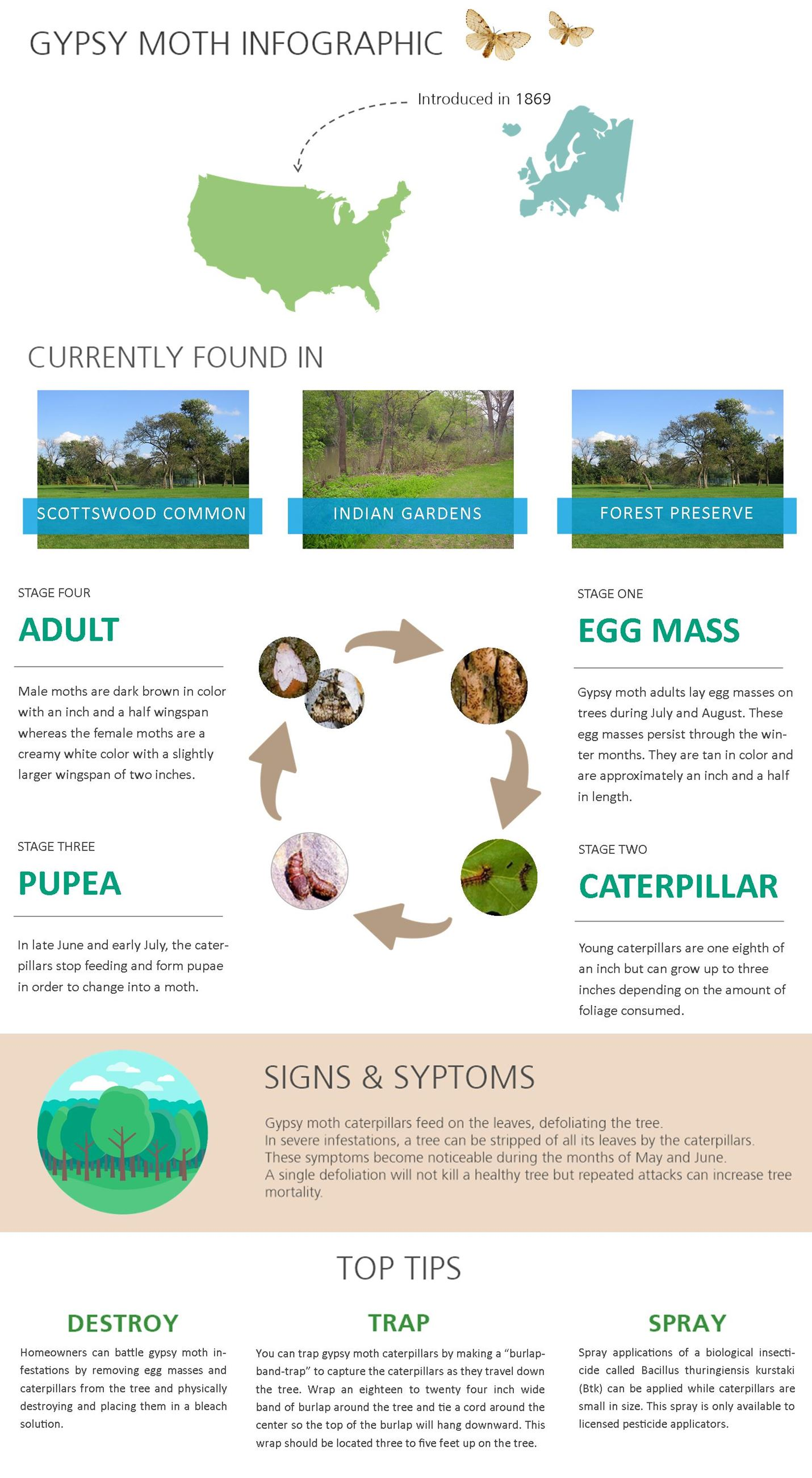 Gypsy Moth Infographic