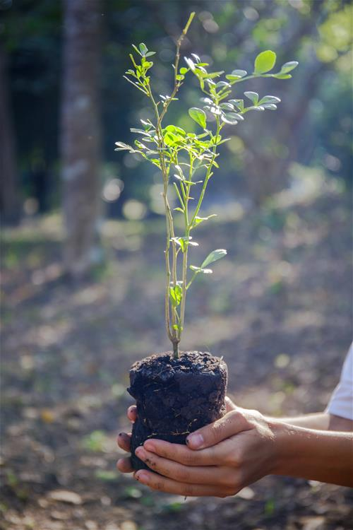 Plant a tree, someone holding a plant